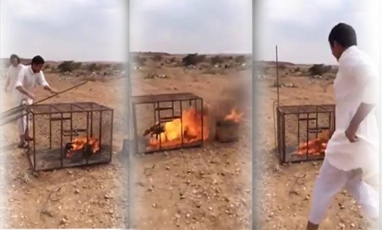 بالفيديو … السجن 70 يوماً و118 جلدة لحارقي الثعلب في عسير