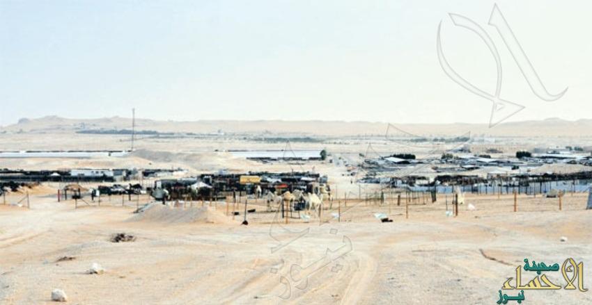 أمانة الأحساء تشرع في تنفيذ خطة لتنظيم وتنظيف سوق الأنعام