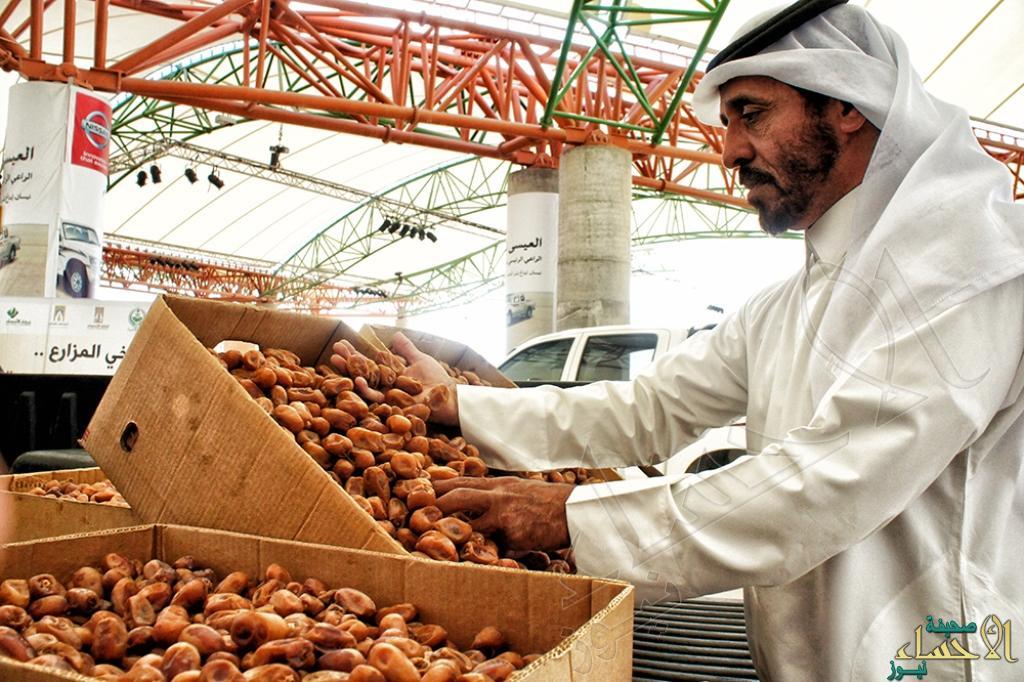 تمر الأحساء سوق مهرجان التمور  (3)