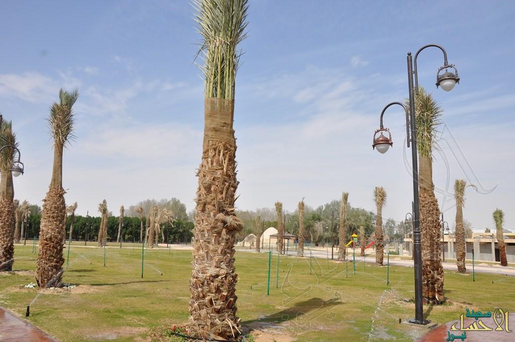 في عيد الفطر.. منتزه الاستاد الرياضي بالهفوف يستقبل زائريه بعد تأهيله