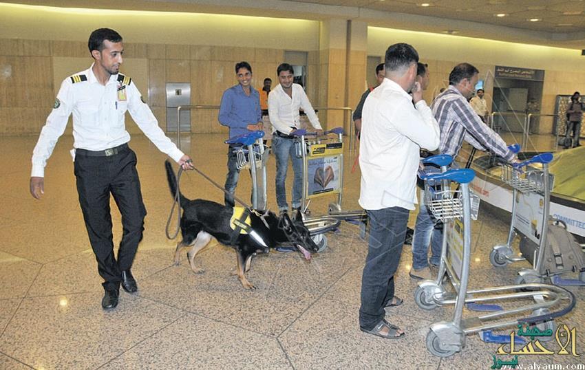 """40 فرقة من """"الكلاب البوليسية"""" بمطار الدمام لمواجهة المخدرات والمتفجرات"""