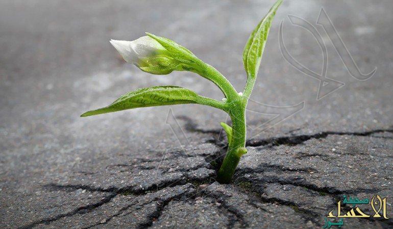 تعرف على النباتات المنزلية الضارة لصحة الإنسان