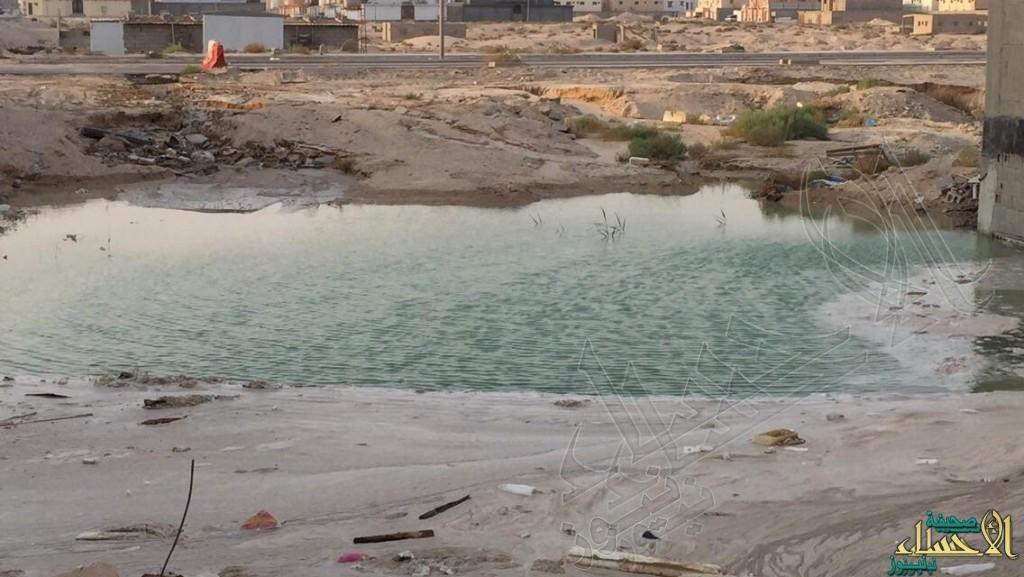 """تعليقاً على #الأحساء_نيوز .. مياه """"الشرقية"""" تعاقب """"مقاول"""" أغرق حي بـ""""المياه"""""""