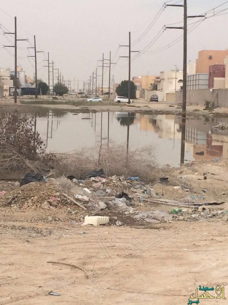 بالصور.. المستنقعات تحاصر سكان محاسن أرامكو !!