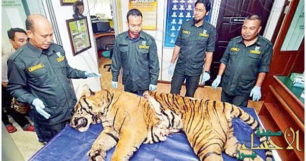 """ماليزيا.. القبض على 3 من آكلي """"النمور"""""""