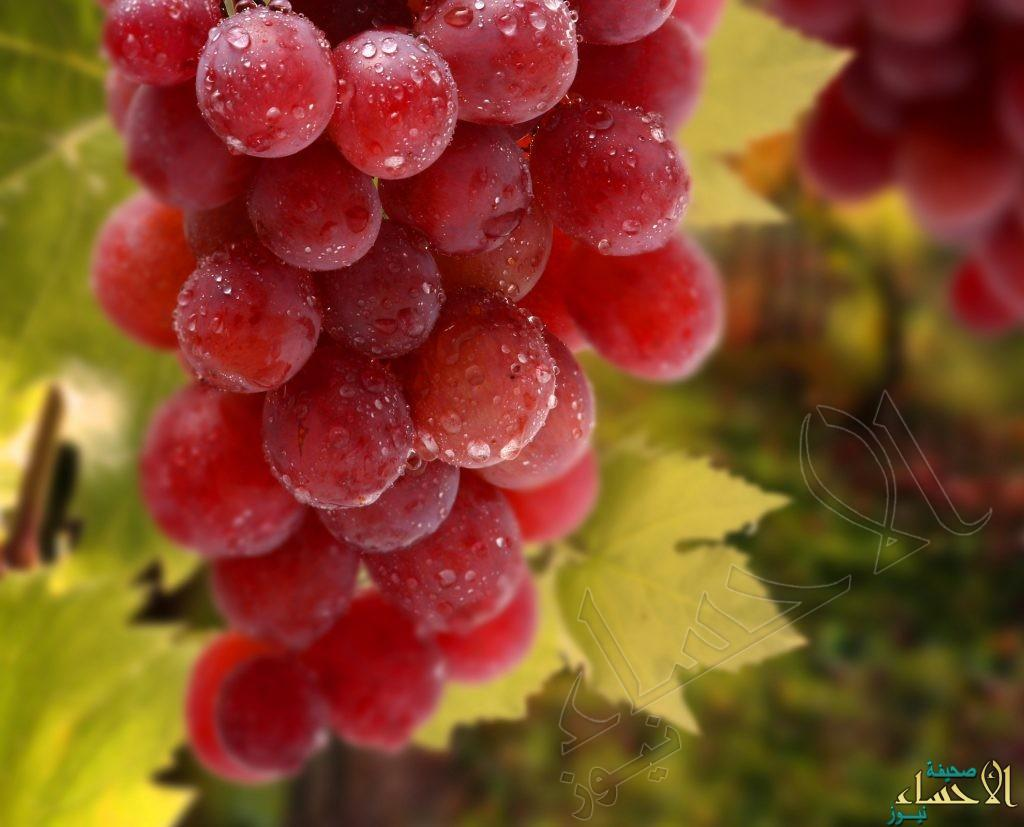 دراسة: مزيج العنب الأحمر والبرتقال يعالج السمنة والسكري
