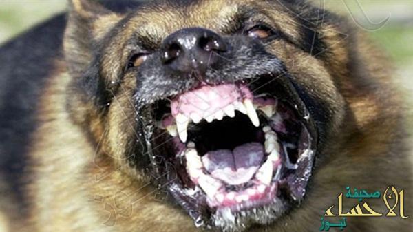 صورة … في #الأحساء كلب يهاجم طفل ويدخله المستشفى إثر جراحه