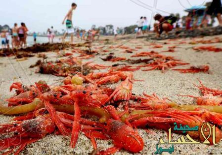 أسراب من السلطعون الأحمر على السواحل الجنوبية لولاية كاليفورنيا الأمريكية. صورة من أرشيف رويترز