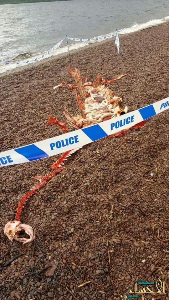 """بالصور .. العثور على الوحش """"لوخ نس"""" قبالة شاطئ باسكتلندا"""