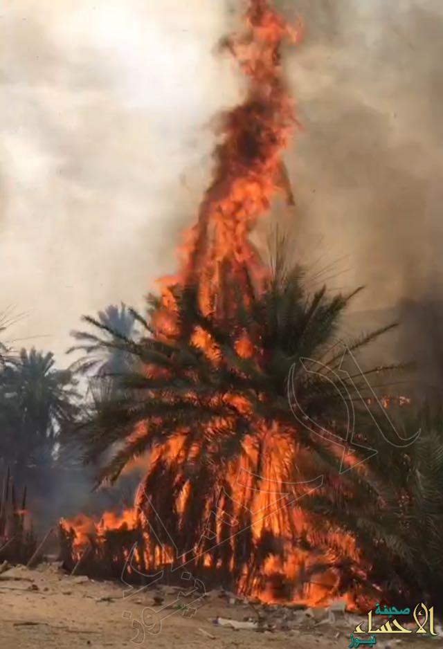 """6 صور جسدت حريق هائل لمزرعة في """"عمران"""" #الأحساء .. والنتيجة إصابتين"""