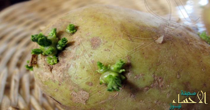 احذروا .. البطاطس الخضراء تسبب التسمم !