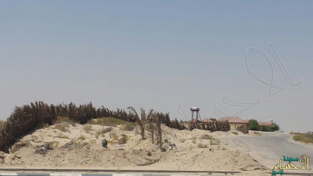 """بالصور و بأمر المحافظ .. بلدي #الأحساء يوقف """"التجاوز"""" ويسترد أرض مساحتها 20 ألف متر مربع"""