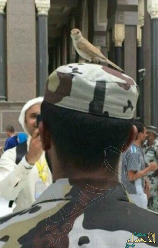 طائر يقف على رأس رجل أمن والنشطاء يصفونه برمز السلام