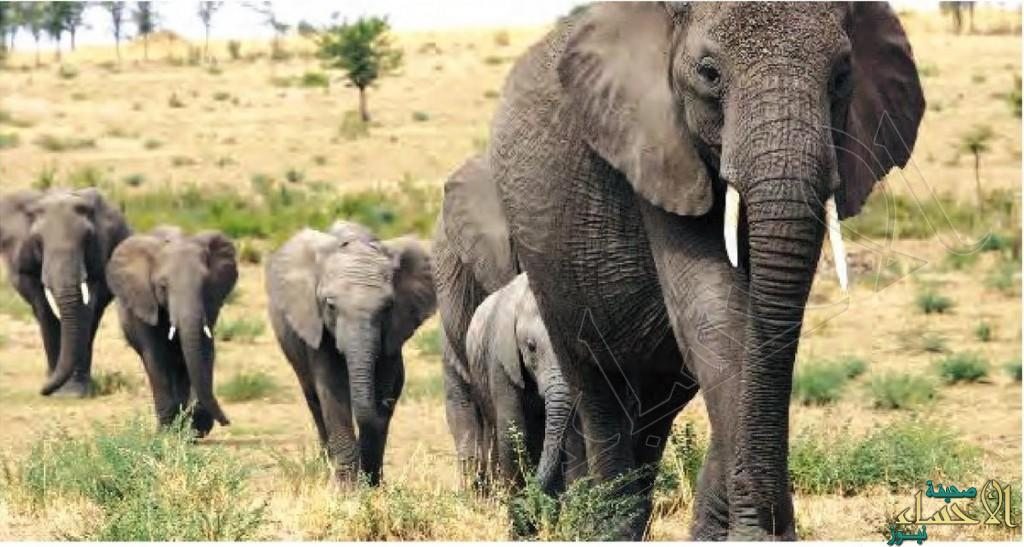 البشر سيقتلون ثلثي الحياة البرية بحلول 2020