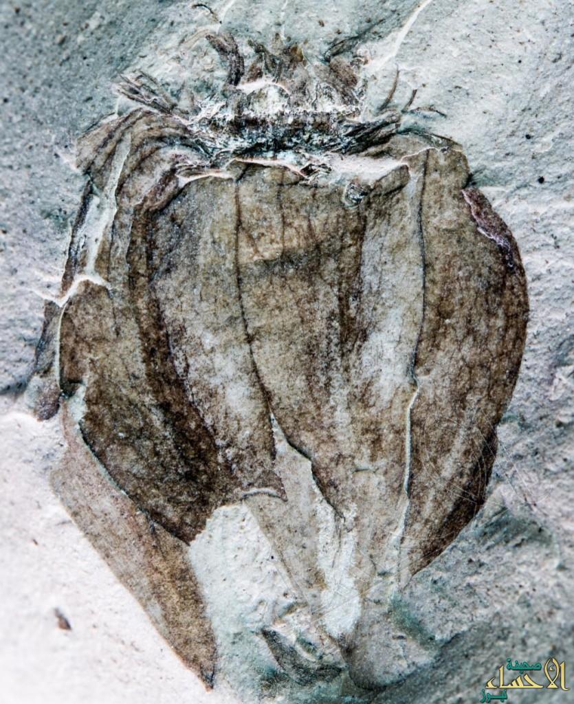 بالصورة.. العثور على ثمرة طماطم أثرية في حجر عمره 52 مليون عام.. كم بلغ وزنها؟