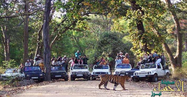 الرعب يجتاح قرى هندية بسبب مقتل 7 في هجمات لنمور
