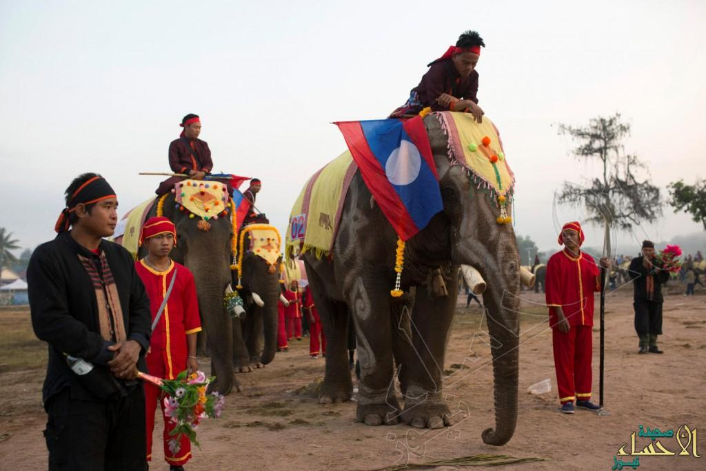 """بالصور.. هذا موكب """"الأفيال"""" في """"لاوس.. أرض المليون فيل!!"""