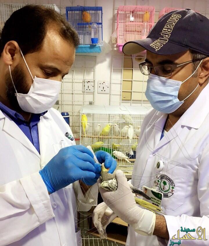 """بالصور… فريق طبي يتقصى """"أنفلونزا الطيور"""" في الأحساء !!"""