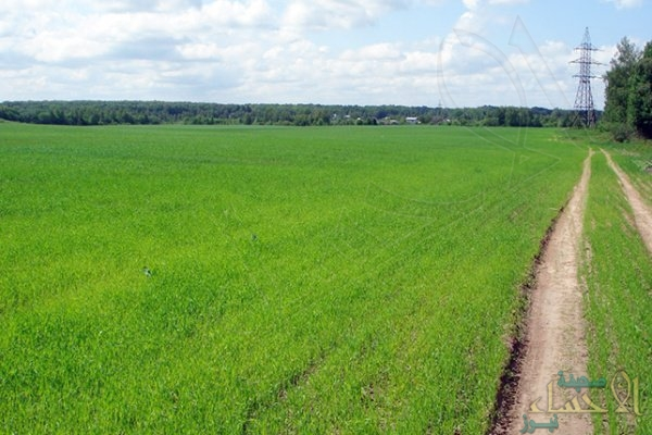"""""""المياه"""": قرار إيقاف زراعة الأعلاف سيُطبق في 6 مناطق فقط"""