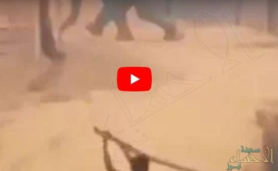 بالفيديو.. فيل ضخم يهاجم مخيم اللاجئين الروهينجا في بنجلاديش