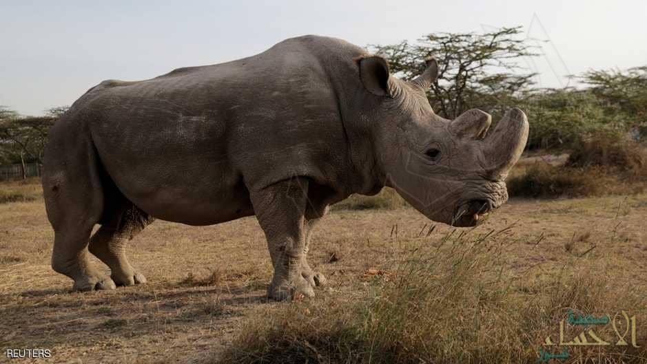 """نهاية """"مأساوية"""" لآخر ذكور وحيد القرن الأبيض في العالم !!"""