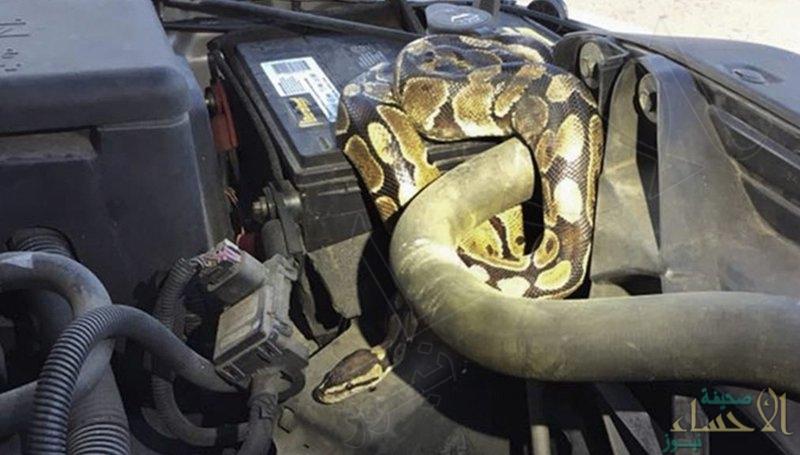 شاهد.. فتحت غطاء سيارتها لتُفاجأ بشيء مرعب !!