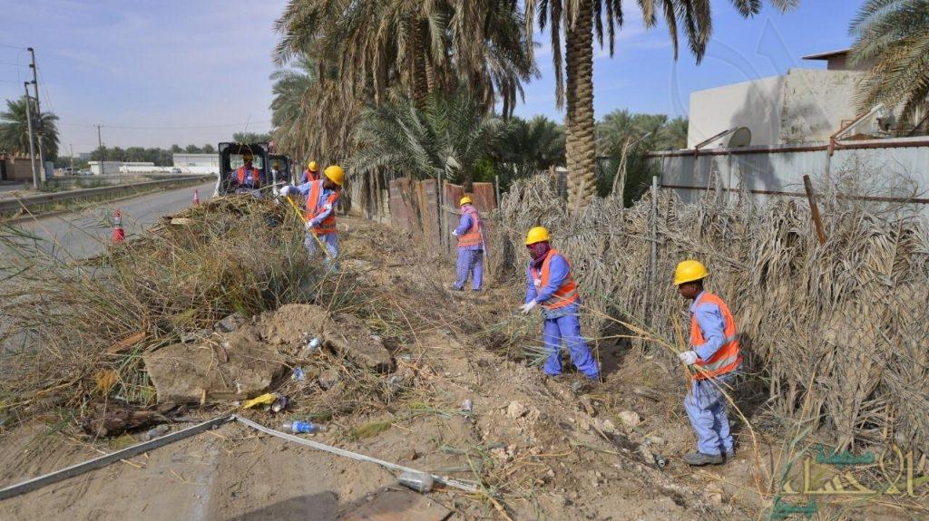 """بالصور.. """"مؤسسة الري"""" تدشن برنامجها لتنظيف الواحة وإزالة """"المخلفات الزراعية"""""""