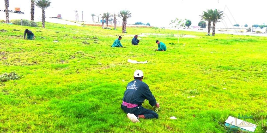 إعادة تأهيل الحدائق العامة والترفيهية بالجبيل