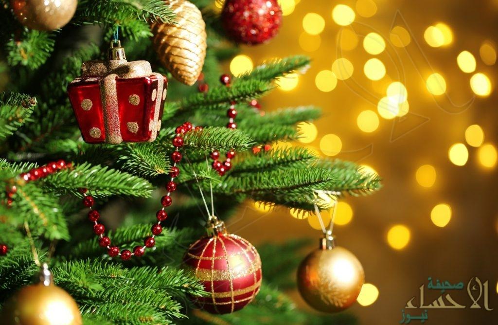 هل يُسمح بدخول شجرة الكريسماس للمملكة؟! .. الجمارك تعلّق