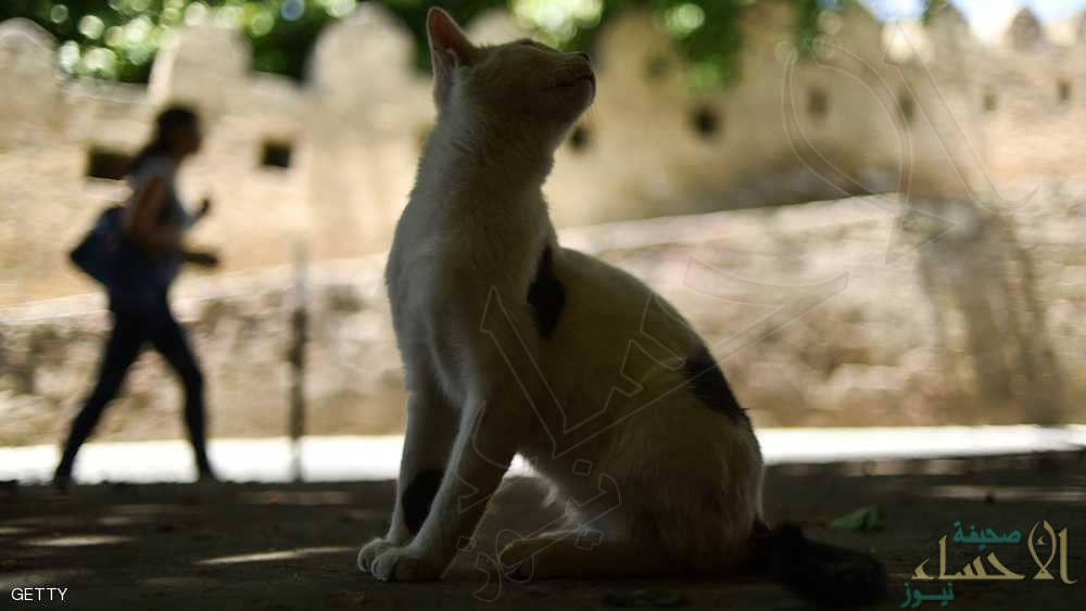مصر.. القطط الجائعة التهمت جثة مربيها المسن !!