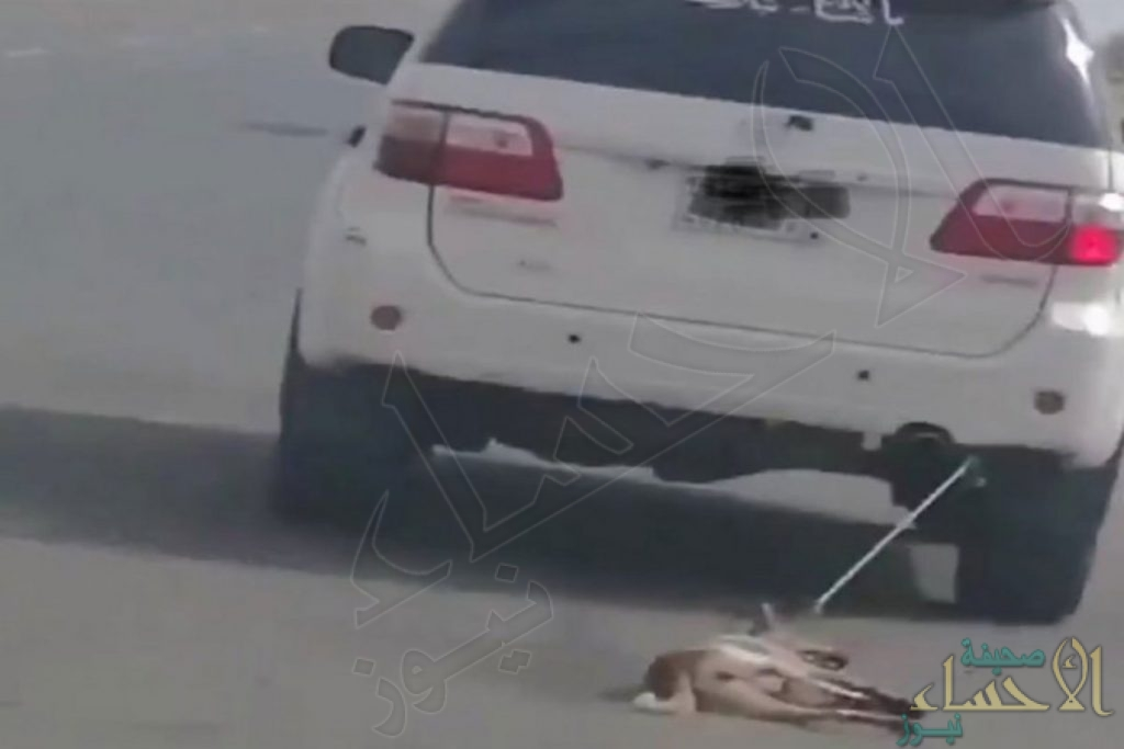 """القبض على """"معذب الكلب"""" في جازان"""