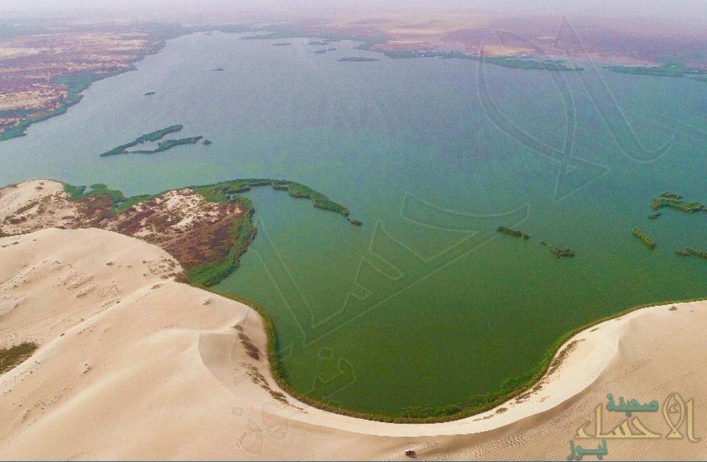 """بشرى لأهالي """"الأحساء """".. الموافقة على تحويل بحيرة الأصفر إلى """"محمية طبيعية"""""""