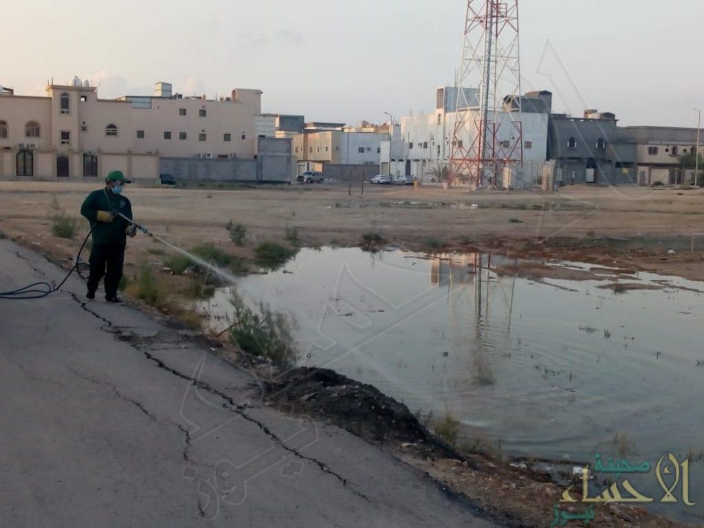 """بالصور… تكثيف عمليات """"الإصحاح البيئي"""" بعد هطول الأمطار على الأحساء"""