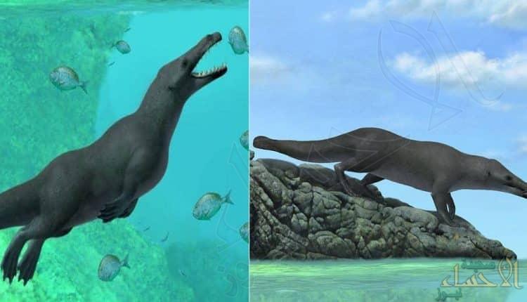 اكتشاف حوت برمائي بـ أربعة أرجل عاش قبل 43 مليون سنة