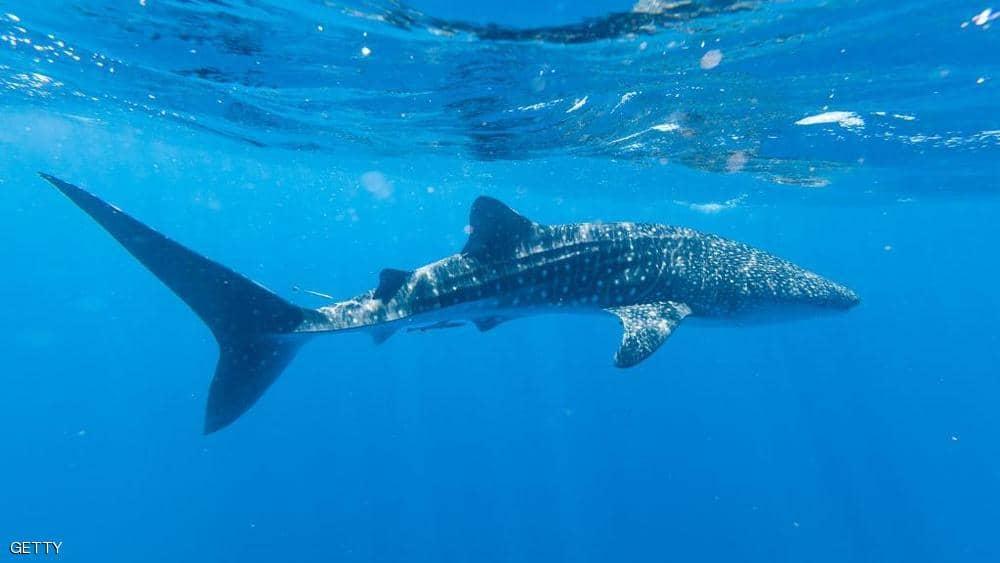 """بين فكي القرش .. اكتشاف """"مذهل"""" يثير دهشة العلماء !!"""