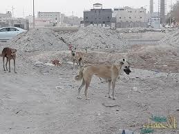 """في فاجعة إنسانية .. في الأحساء كلاب ضالة تنهش """"طفل""""  حتى وفاته"""