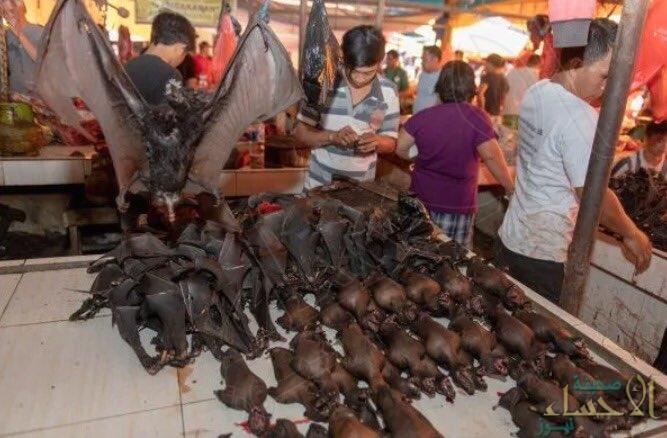 """رسميًّا.. """"ووهان الصينية"""" تحظر أكل الحيوانات البرية"""