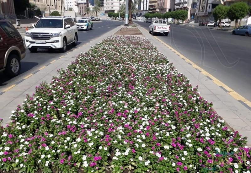 35 ألف زهرة تزين طريق المسجد الحرام وميدان زمزم