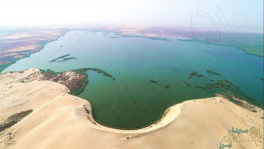 """على مساحة 326 مليون متر مربع … """"بحيرة الأصفر"""" في الأحساء تجربة سياحية فريدة بالمملكة (صور)"""