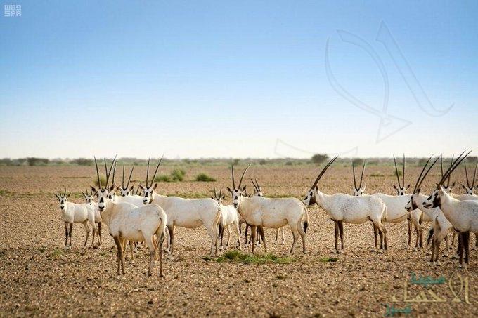 غرامات قاسية ضد صائدي الحيوانات البرية.. تصل إلى 1.5 مليون ريال
