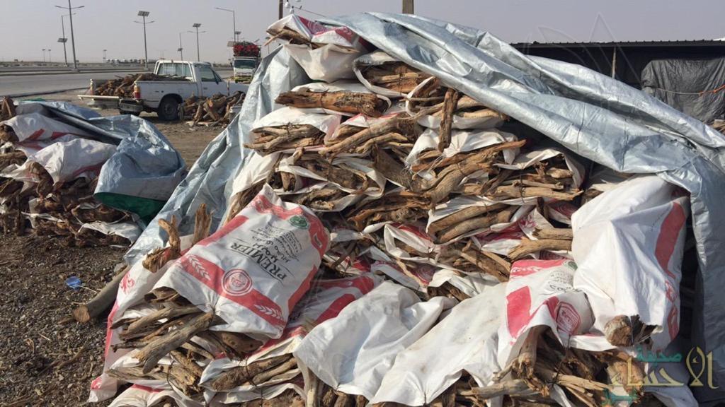 """بعقوبات تصل لـ 15 ألف ريال .. """"فرق البيئة"""" تترصّد البيع الجائر للحطب في الأحساء (صور)"""