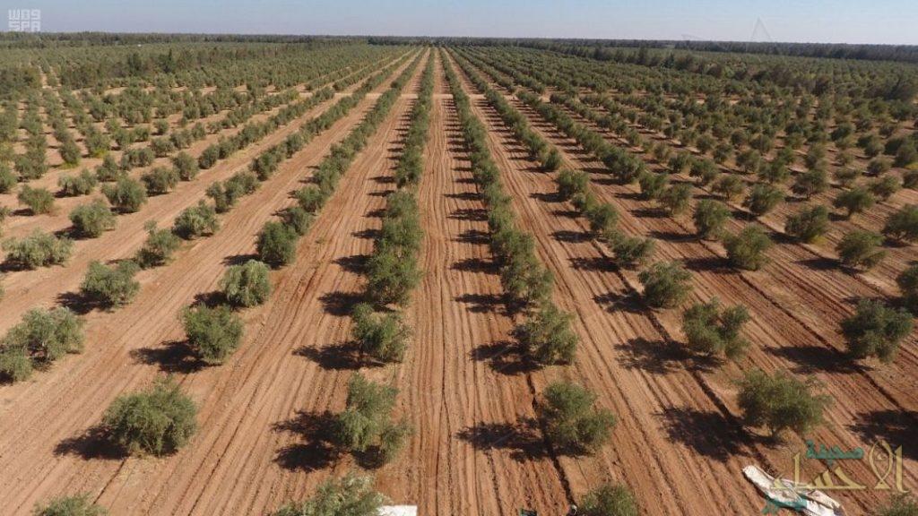 """مذكرة تفاهم بين """"البيئة"""" و""""الحرس الوطني"""" لزراعة 3 ملايين شجرة محلية"""