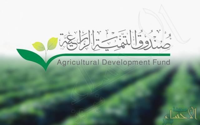 """""""التنمية الزراعية"""" يبدأ تلقي طلبات تمويل صغار مربي الماشية .. مرفق الرابط والشروط"""