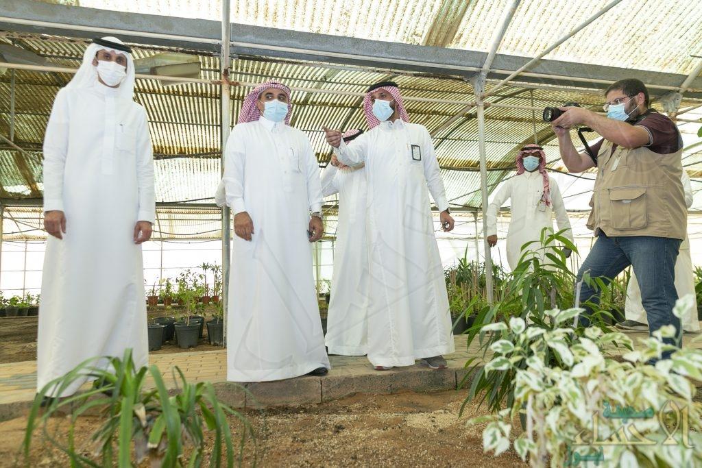 في الأحساء … إنتاج  6.5 مليون شتلة من الزهور والأشجار سنوياً (صور)