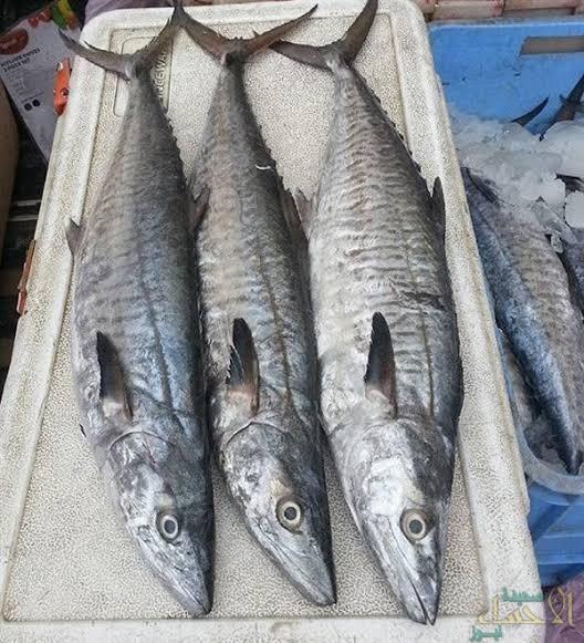 """الأحد المقبل … حظر صيد أسماك """"الكنعد"""" بسواحل الشرقية لمدة شهرين"""