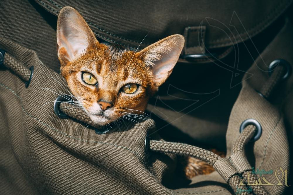 قريبًا …. السماح بركوب الحيوانات وسائل النقل بالمملكة