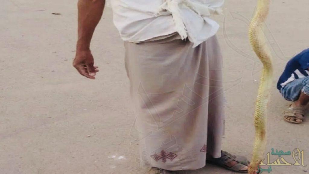 نجاة مواطن بأعجوبة من لدغة ثعبان سام داخل دورة مياه
